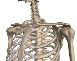 肩甲骨の遊び