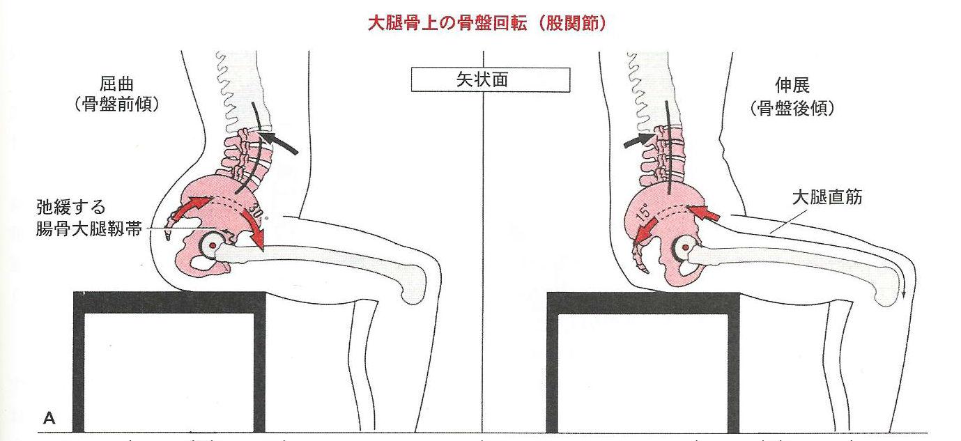 骨盤の動き(前後傾)