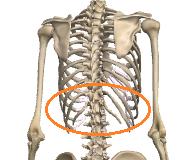胸郭の回転